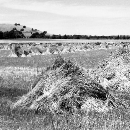 Ballarat Stooks - Each archival photograph is stamped and signed by Robert and a brief description of how it was taken.