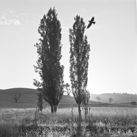 Albury Galah - Each archival photograph is stamped and signed by Robert and a brief description of how it was taken.
