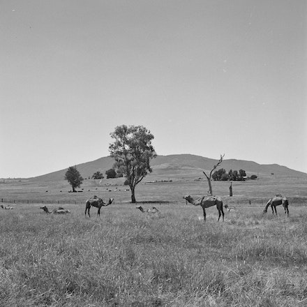 Three Camels - Each archival photograph is stamped and signed by Robert and a brief description of how it was taken.
