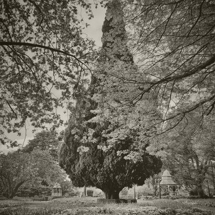 Corbett Gardens, Tulip Time, Bowral - Each archival photograph is stamped and signed by Robert and a brief description of how it was taken. The options...