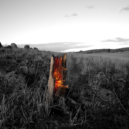 Burning Log Gunning - Colour photograph with black and white background,this burning log was smouldering in the middle of a paddock ,either lit by a farmer,or...