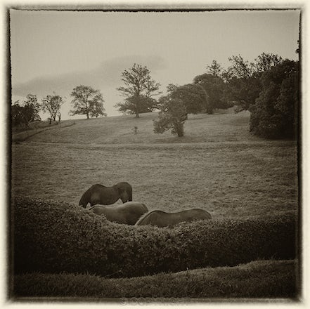 Three Headless Horses, Sutton Forest - Each archival photograph is stamped and signed by Robert and a brief description of how it was taken. The options...