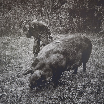 Manuel, the Pig Whisperer of Bundanoon - Each archival photograph is stamped and signed by Robert and a brief description of how it was taken. The options...