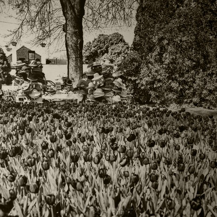 Tulip Time Corbett Gardens, Bowral - Each archival photograph is stamped and signed by Robert and a brief description of how it was taken. The options...