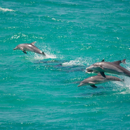 Dolphins_1973