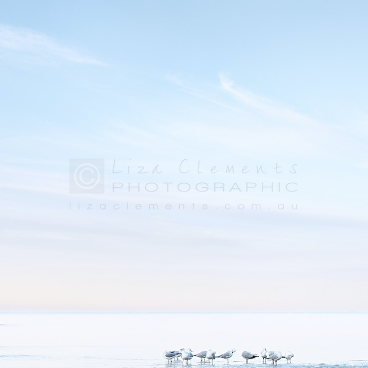 Seagulls at Beaumaris©LE - Seagulls at Beaumaris