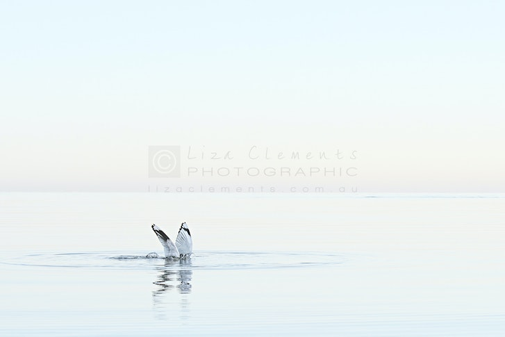 Without A Sound© - Without A Sound Beaumaris 2016 Open Edition Silver APPA Award, 2016 AIPP Australian Professional Photography Awards Silver VIPPY...