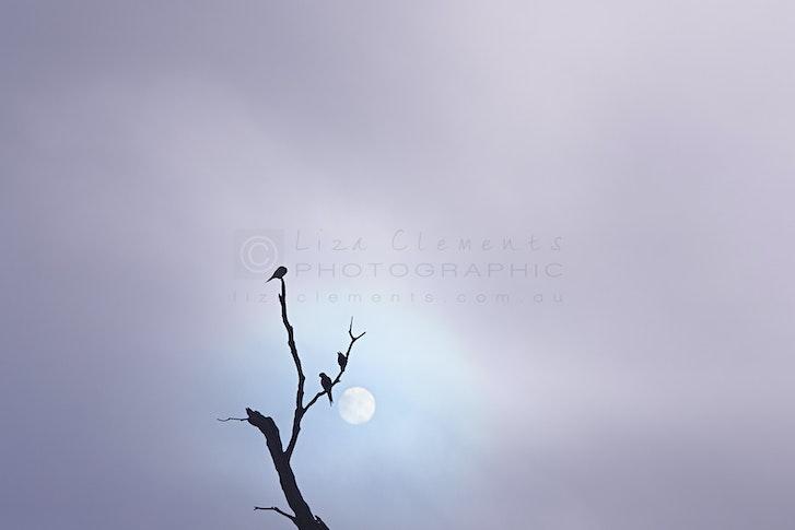 Through The Morning Mist, Beaumaris© - Through The Morning Mist Beaumaris, Melbourne, Victoria 2017 Open Edition