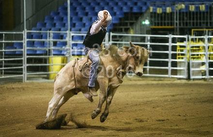 bullride-185