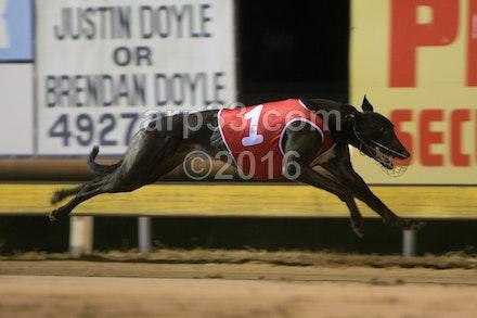 Greyhounds 071015-6