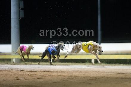 Greyhounds 071015-10