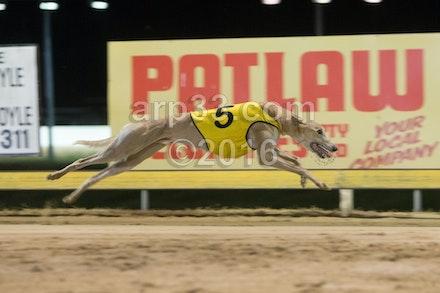 Greyhounds 071015-12