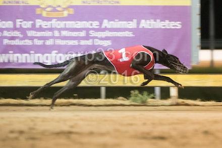Greyhounds 071015-14