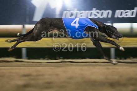 Greyhounds 071015-17