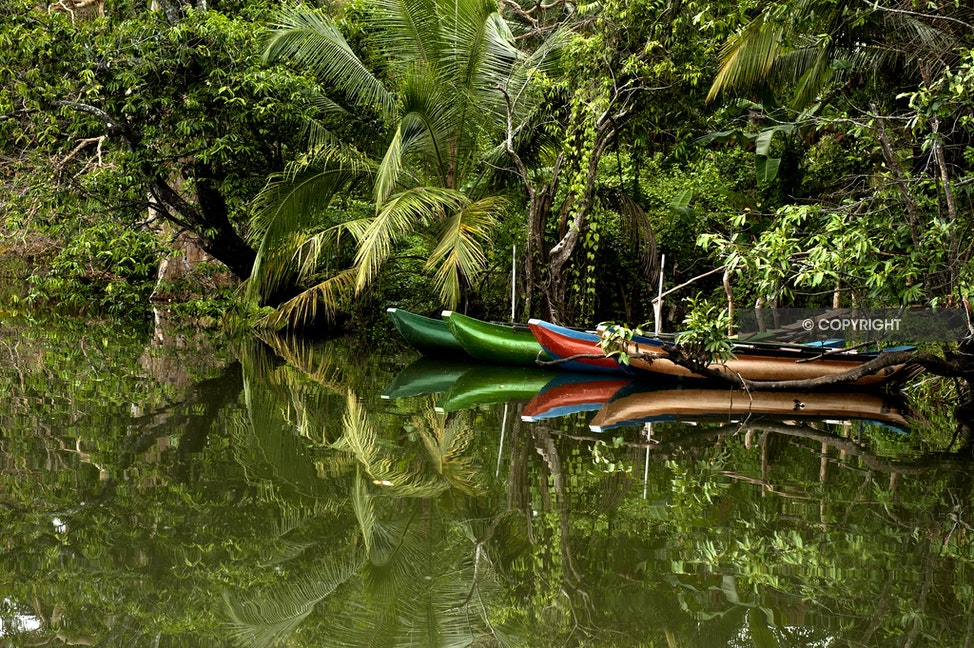 BOATS_DSC4868 - Boats, green, red and green, intense growth,