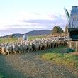 SHEEP - WOOL, SHEEP, LAMBS,PASTURE,GRAZING,FLOCK,MERINO,