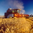 WHEAT - HARVESTER,GOLDEN,STRIP FARMING,FLOW,GREEN,SPELT BREAD,