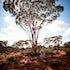 Helen Osler FairiesDSC_3942 - The Kalgoorlie bush fairies