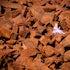 DSC_4721 - A fairy in amongst the Burrup rock art near Karratha.
