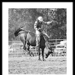 Picton Rodeo - A selection of shots from the Picton Rodeo on 5th jan 2012 . A very hot and dusty day