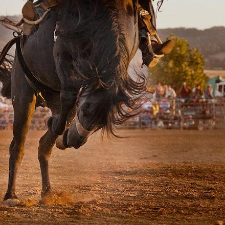Rodeo 6  bronco closeup _4650