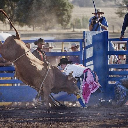 Rodeo 7 steer - clown _4541
