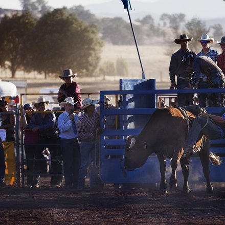 Rodeo 11 bull ride _4533