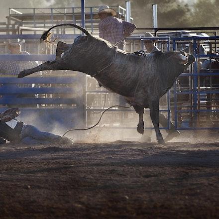 Rodeo 12 bull ride fall _4569
