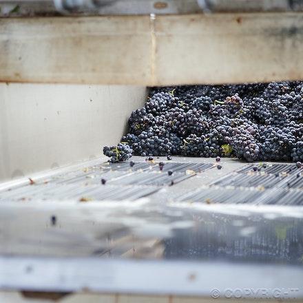HC Somerled Pinot winery 2 7027 - The story of Somerled Wines 2013 Pinot Noir Rose'.