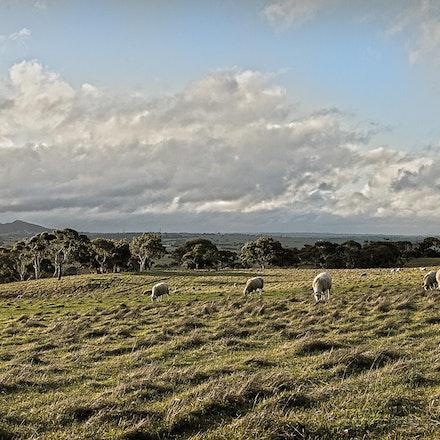 Rural Winter Landscape - Views to Mt Barker, South Australia