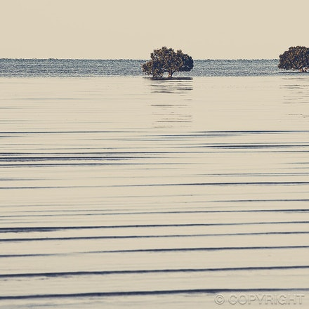 Mangroves - Port Germain, South Australia