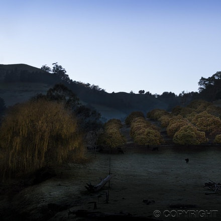 Golden Orchard - Chestnut grove - Adelaide Hills