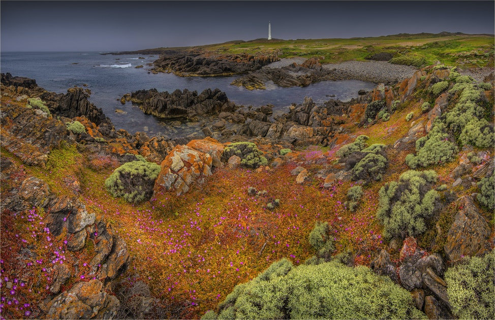 Cape-Wickham-Summer-Blooms-KI0773-20x45