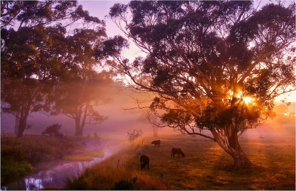 A-Pastoral-Dawn-TAS0198911-11x17
