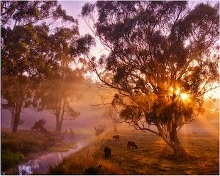 Midlands and Pastureland Tasmania