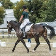 WH  ARC CT 18  DRESSAGE ALBUM 2