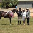 Mixed Ponies/horses