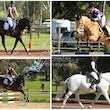 COLAC ARC DRESSAGE & SHOW jUMPING