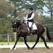 Dressage in the Valley     10.00-12.00
