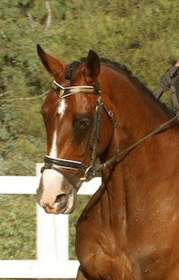 KYLIE'S MARE