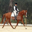 HURSEBRIDGE HRCAV DRESSAGE DAY October 12 2014