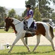 WHITTLESEA PONY CLUB  CT November 9 th