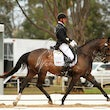 MACEDON RANGES DRESSAGE DAY @ Werribee 1st  February 2015 - Unfortunitly  I missed a few riders who requested photos outside for which I do apologize.....