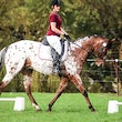 WHITTLESEA ARC DRESSAGE May 3 2015