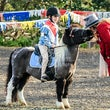 FINDON PONY CLUB SHOW