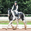MENTONE DRESSAGE @ WERRIBEE July 12 2015