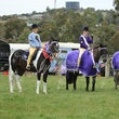 WHITTLESEA PONY CLUB   WINTER WOOLIES