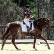 HURSTBRIDGE ARC DRESSAGE 2015