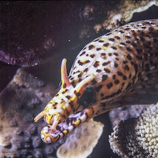 Underwater - A selection of underwater photographs from 2005 mostly taken on my Nikonos underwater camera.