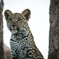 Little Mombo, Okavango - Images from the area around Little Mombo in the Okavango, Botswana. #Okavango, #Chief's Island, #Little Mombo, #Botswana, #Wildlife,...